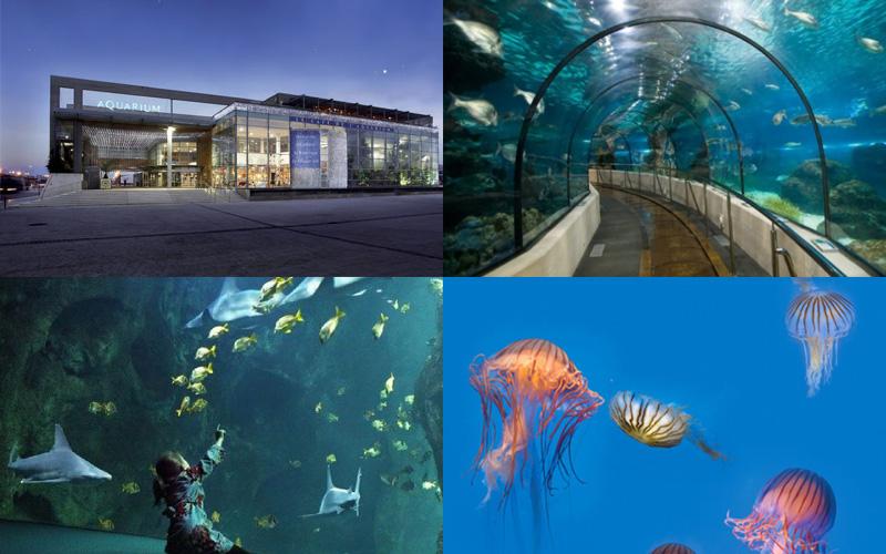 Villa-vendee - Vakantievilla in de Vendée - Les Jardins des Sables d'Olonne - Aquarium La Rochelle compositie